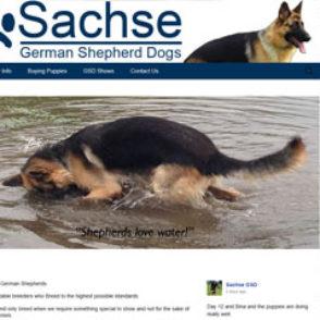 Sasche GSD